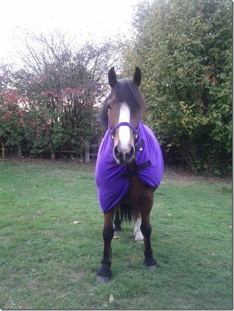 Horse in purple